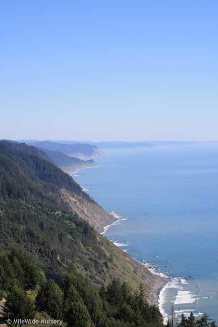 Looking South down the Lost Coast
