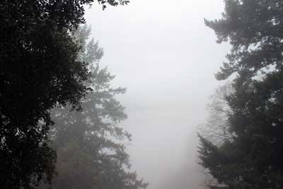 Foggy Blog 2