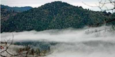 foggy blog 4
