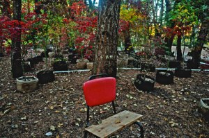 maple_garden2