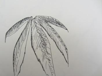 a maple leaf