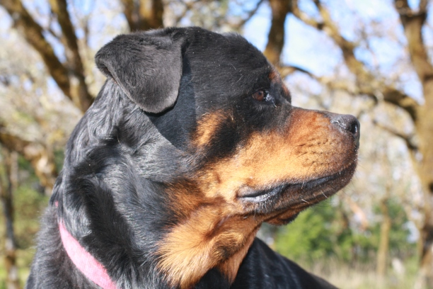dog-xara_0571