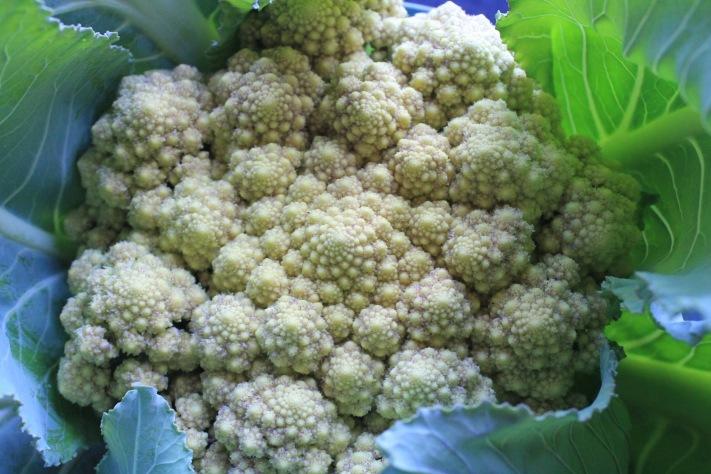 6:16_cauliflower2