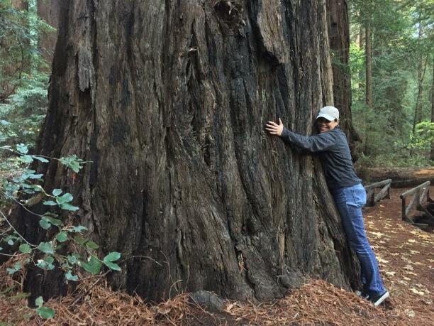 TreeHugging